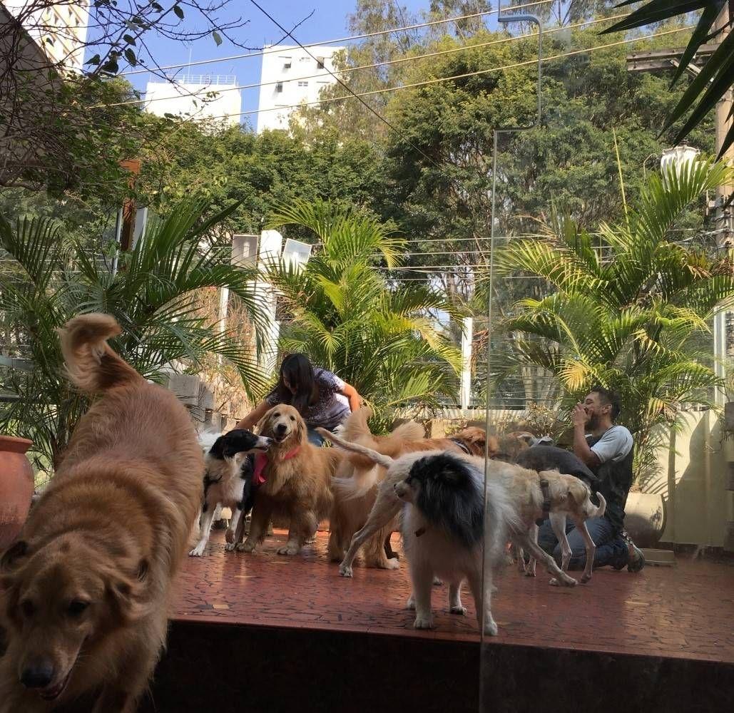 Quanto Custa Centro Clínico de Fisioterapia Canina em Ribeirão Pires - Fisioterapia Canina na Vila Mariana