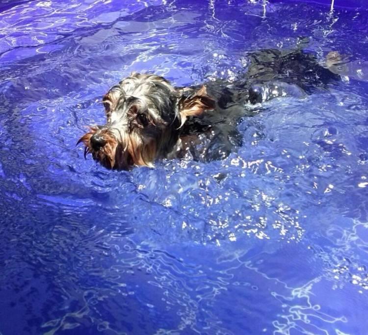 Quanto Custa Centro de Natação para Cachorro em Barueri - Centro de Natação para Cachorro