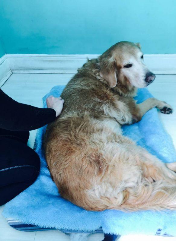 Quanto Custa Fisioterapia Canina no Campo Belo - Fisioterapia Canina na Vila Mariana