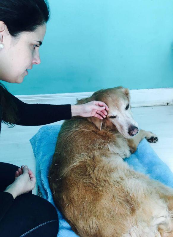 Quanto Custa Fisioterapia para Cachorros no Butantã - Fisioterapia Canina em Sp