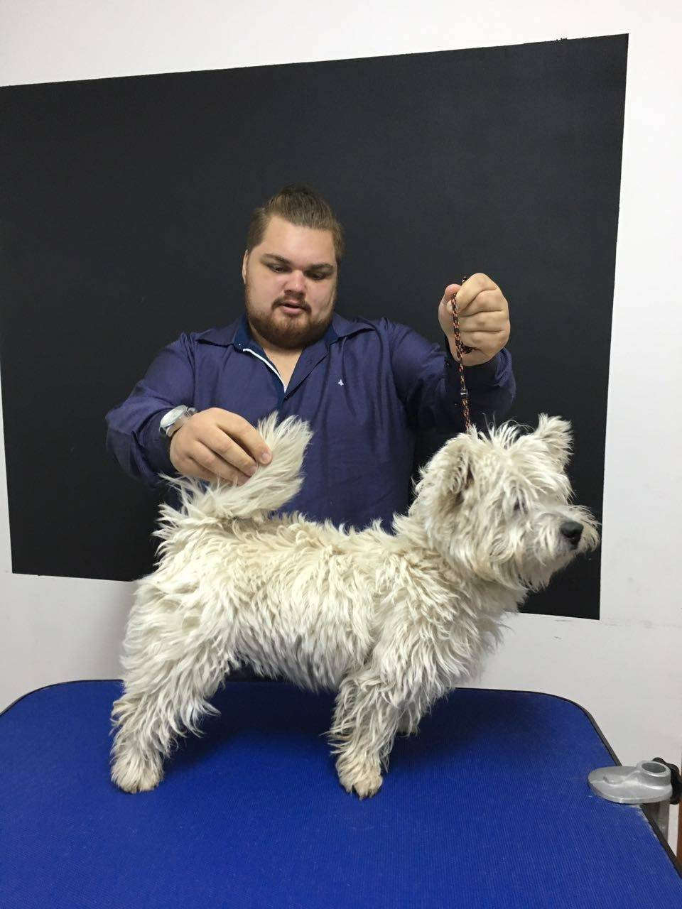 Quanto Custa Hand-Stripping em Cães em José Bonifácio - Stripping Schnauzer