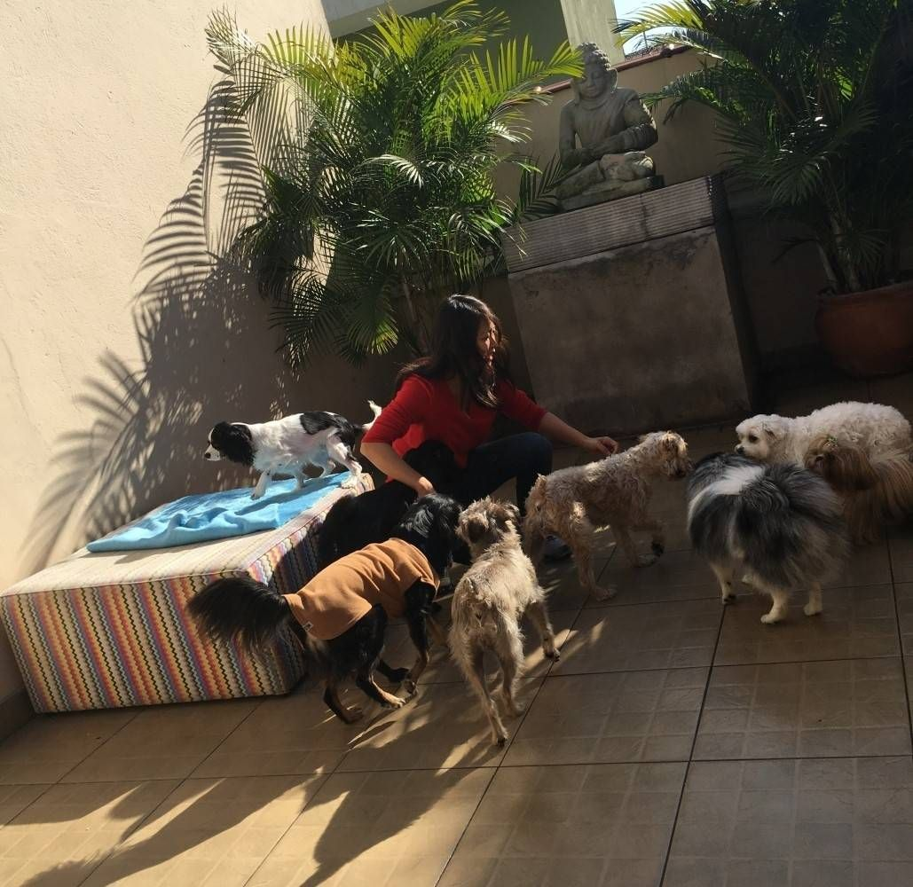 Quanto Custa Hotel para Cachorro em Biritiba Mirim - Hotel para Cachorro na Vila Mariana