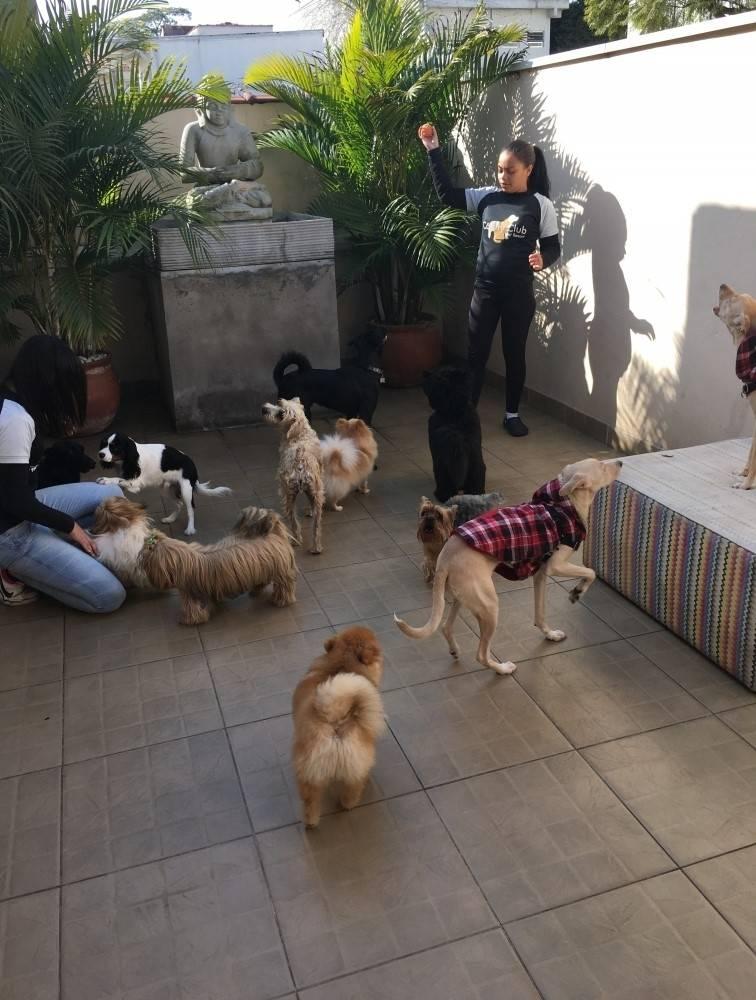 Quanto Custa Hotelzinho para Cachorro em São Miguel Paulista - Hotel para Cachorro na Vila Mariana