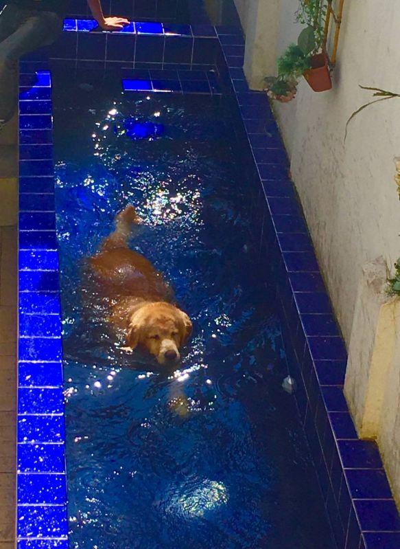 Quanto Custa Natação de Cachorro no Campo Grande - Centro de Natação para Cachorro