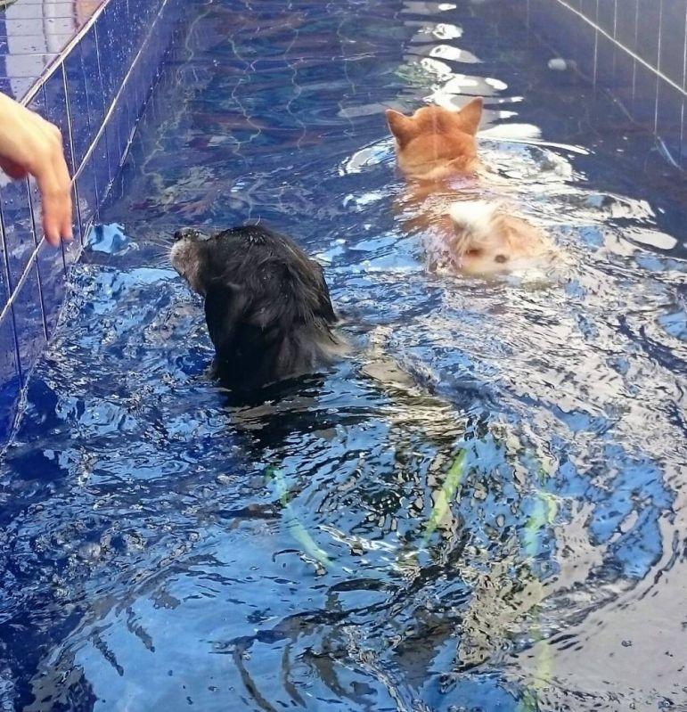 Quanto Custa Natação para Cachorro em Sp em Cajamar - Centro de Natação para Cachorro