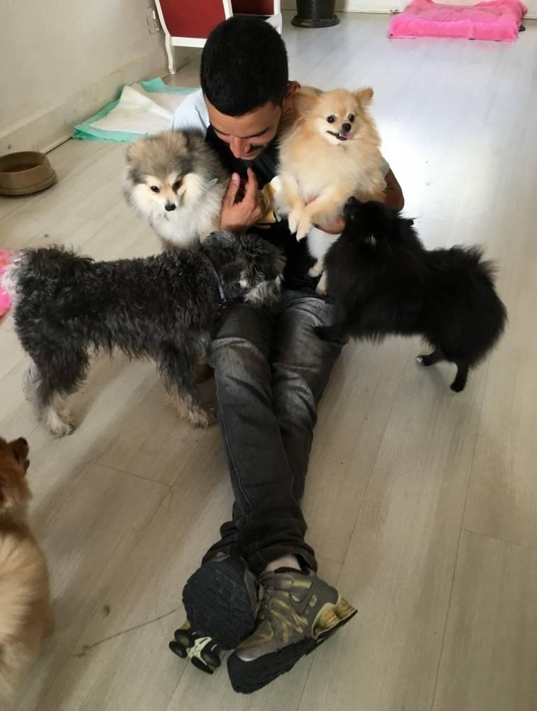 Quanto Custa Serviços de Fisioterapia Canina no Butantã - Serviços de Fisioterapia Canina