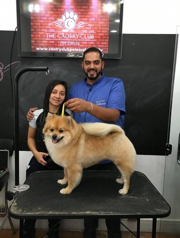 Quanto Custa Stripping em Fox Terrier em Guianazes - Stripping Schnauzer