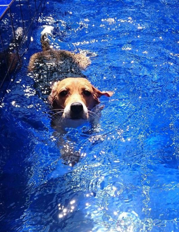 Quanto Custa Tratamento de Fisioterapia Canina na Mooca - Fisioterapia para Cachorros