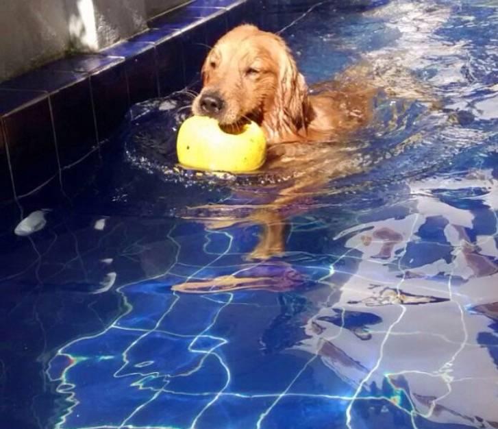 Resort e Natação para Cães em Osasco - Centro de Natação para Cachorro