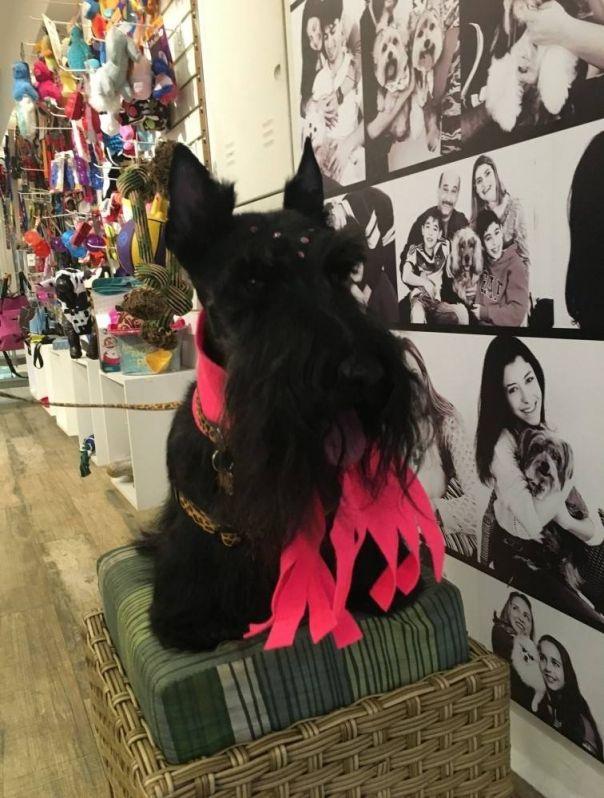 Serviço de Boutique para Cachorros na Santa Efigênia - Boutiques para Cães