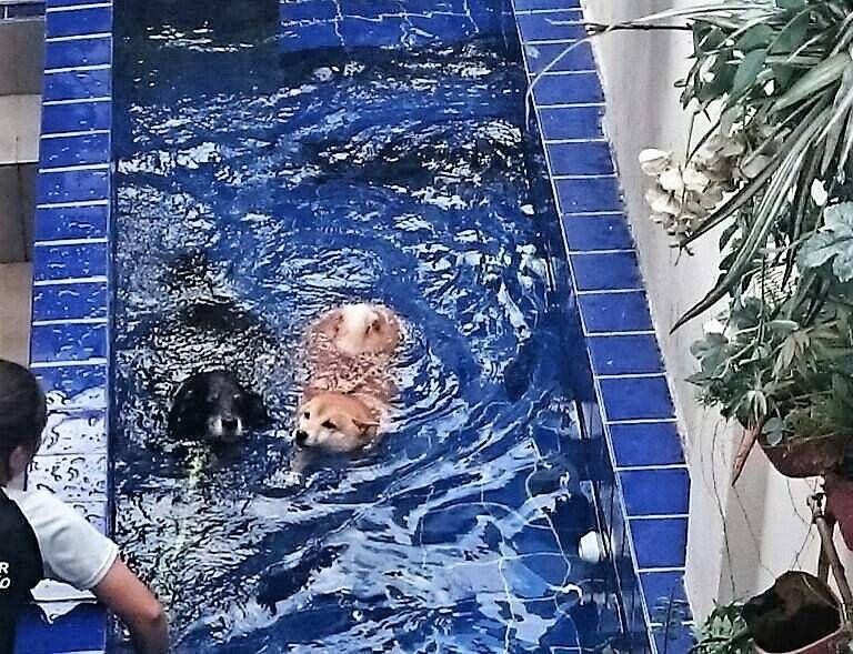 Serviço de Natação para Cão em Brasilândia - Centro de Natação para Cachorro