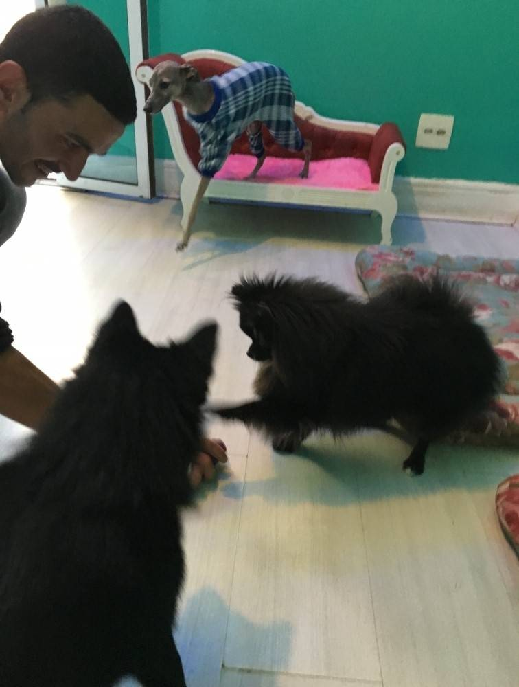 Serviço Especialista em Cães no Capão Redondo - Hotel para Cães