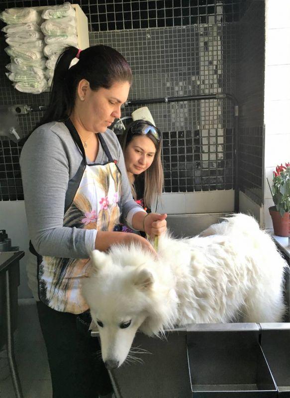 Serviço para Ensino de Banho e Tosa em Animais no Parque do Carmo - Cursos de Banho e Tosa em São Paulo
