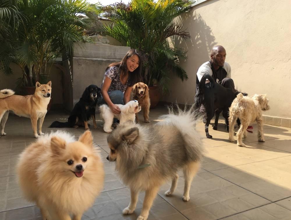 Serviços de Fisioterapia Canina no Bairro do Limão - Fisioterapia para Cães