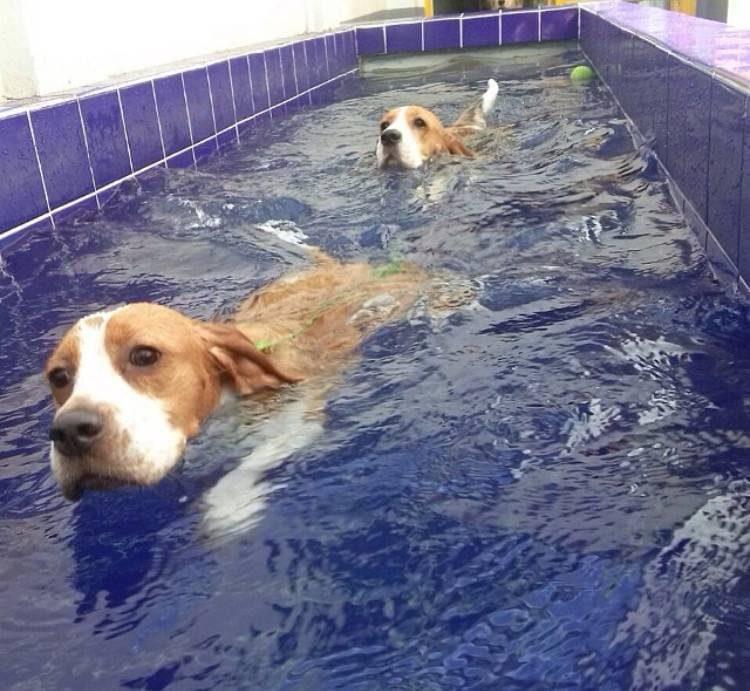 Serviços de Terapia e Natação para Cachorro em Itapecerica da Serra - Centro de Natação para Cachorro