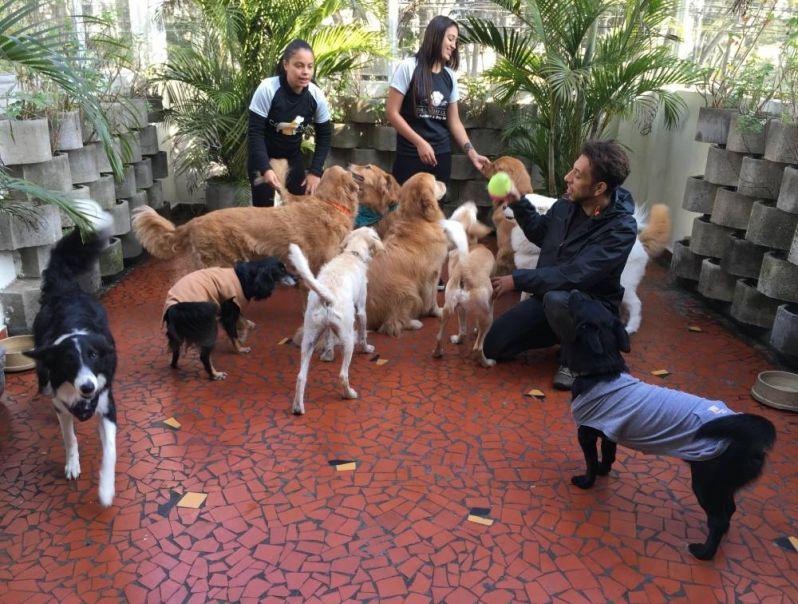 Serviços Especializados em Cachorros em Embu das Artes - Hotel para Cães