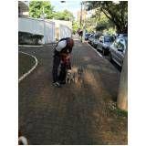 academia canina para adestramento na Ponte Rasa