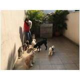 academia para adestramento de cães em São Domingos