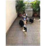 adestramento de cachorro filhote em Itaquera