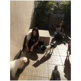 adestramento de cachorro grande em Guianazes