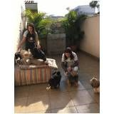 adestramento de cachorro pequeno na Freguesia do Ó