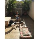 adestramento de cachorros preço no Butantã