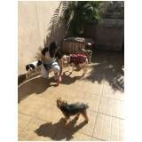 adestramento de cachorros no M'Boi Mirim