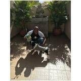 adestramento de cães na Água Funda