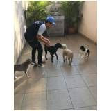 adestramento de cachorro sp