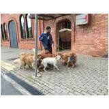 adestramento para cachorros em Água Rasa