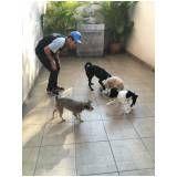 adestratemnto para cães preço em Perdizes