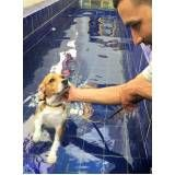 aula de natação para cachorro em Engenheiro Goulart