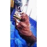 aula de natação para cachorros em Santo Amaro