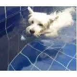 aula de natação para cães em Moema
