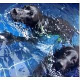 aulas de natação canina em Glicério