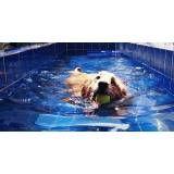 aulas de natação para cachorro na Vila Esperança