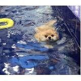 aulas de natação para cachorros em Santo Amaro