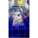 aulas de natação para cão na Bela Vista