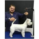 banho e tosa canina