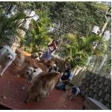centro clínico de fisioterapia canina preço em Mauá