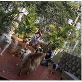 centro clínico de fisioterapia canina preço na Cidade Tiradentes