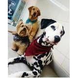 centro de estética para cachorros no Tremembé