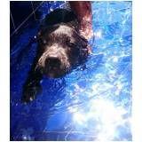 centro de natação canina na Saúde