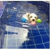 centro de natação para cachorro em Interlagos