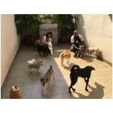 centro de reabilitação com  fisioterapia canina no Sacomã