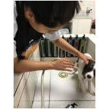 clínica de estética para cachorros em Mauá