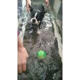 clínica de fisioterapia para cães no Jardim São Paulo