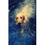 clínica de natação canina em Francisco Morato