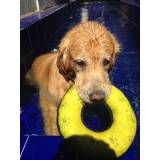 clínica de natação para cachorro no Socorro