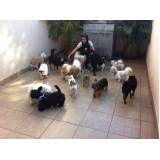 creche canina preço em Guararema